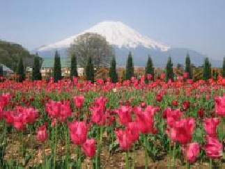箱根散策定番観光コースへご案内
